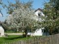 2013-05-08-Schreier-Apfelblüte